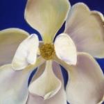 hollister_morning_magnolia_large