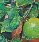<em>Montecatini Lemon</em>