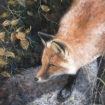 Focus - Red Fox