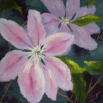 moores_clematis_500H
